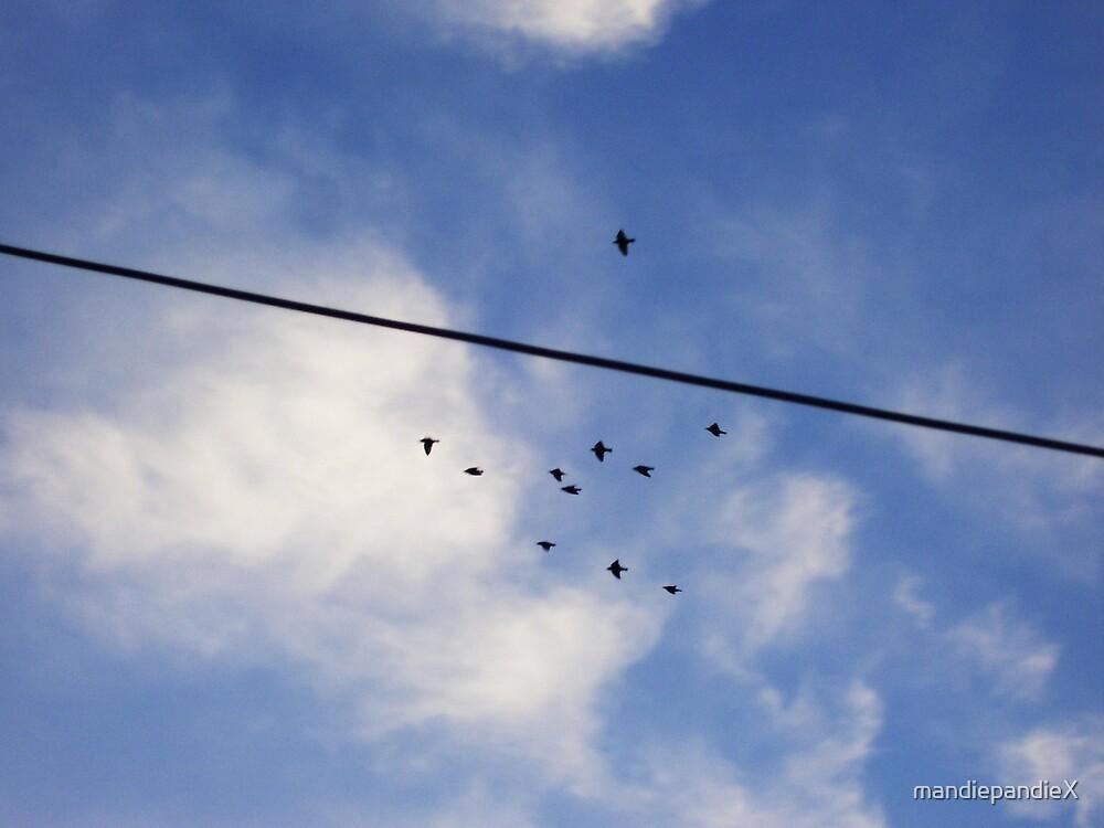 Birds on a Wire by mandiepandieX