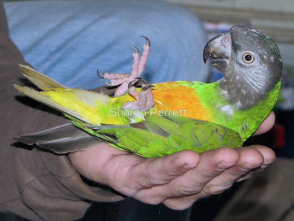 Rockabye Birdie by Sharon Perrett