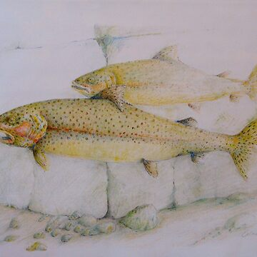 Trout by del8888