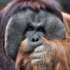 Orangutan by Savannah Gibbs