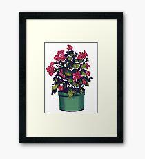 Begonia Framed Print