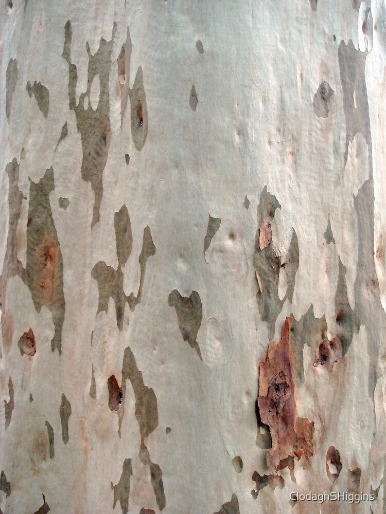 Blackbutt Tree II by ClodaghSHiggins