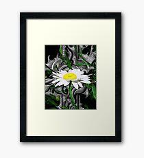 Dewdrop Daisy Framed Print