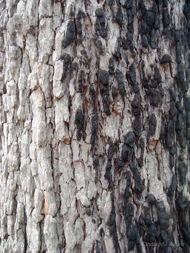 Blackbutt Tree IV by ClodaghSHiggins