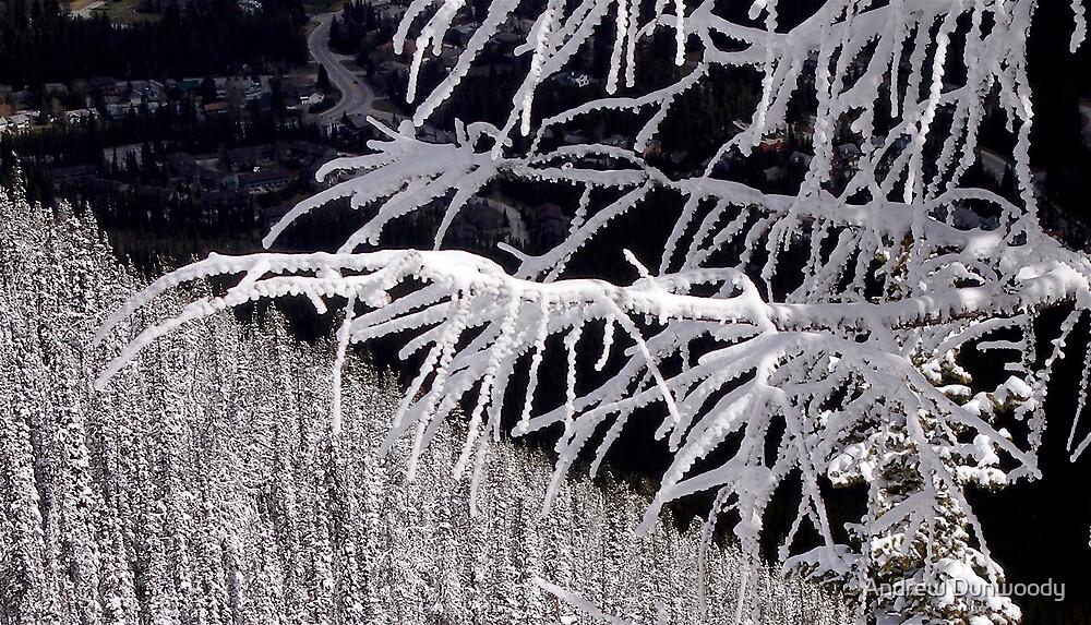 Snowy Tree by Andrew Dunwoody
