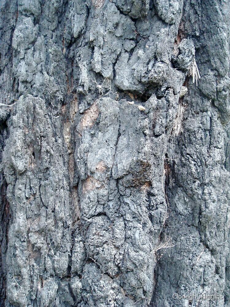 Blackbutt Tree IX by ClodaghSHiggins