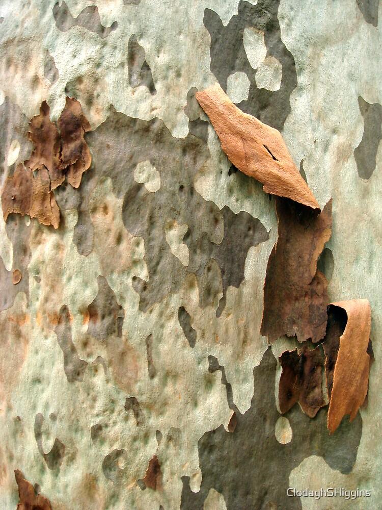 Blackbutt Tree X by ClodaghSHiggins
