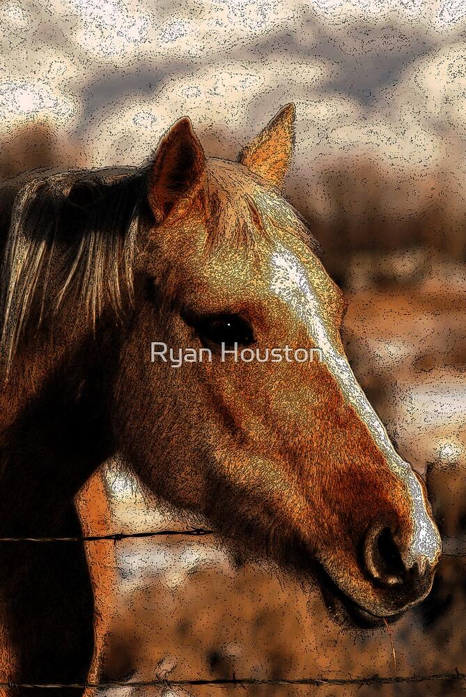 Palomino Beauty by Ryan Houston