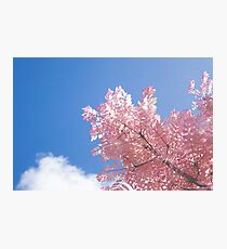 Pink tree Blue skies Photographic Print