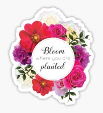 Inspirational Quotes - Bloom Where You Are Planted Sticker
