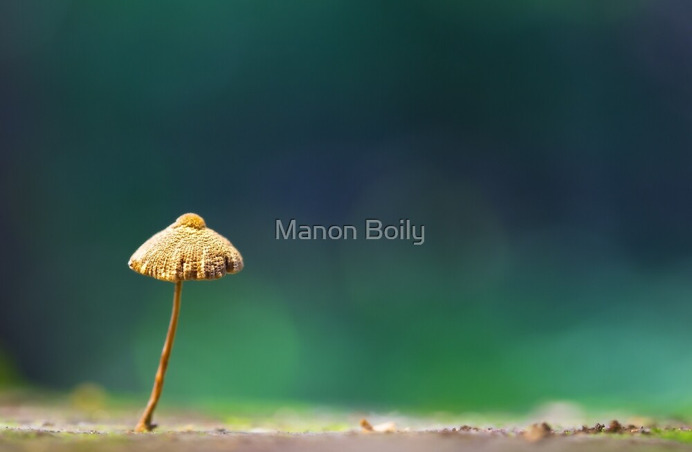 lonely shroomy by Manon Boily