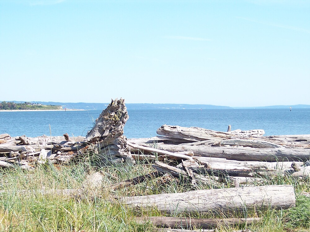 Driftwood Ocean View by Valerie
