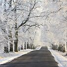 Alley with frost covered trees by Remo Savisaar