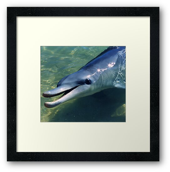 Dolphin Smile by Maggie Hegarty