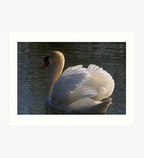 Mute Swan #2   Art Print