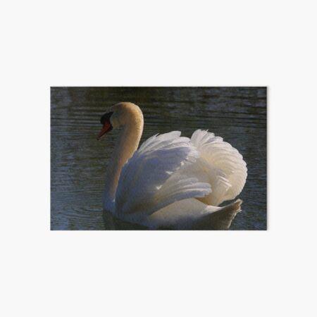 Mute Swan #2   Art Board Print
