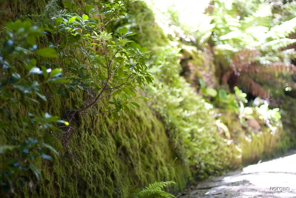 Green Wall by norgan