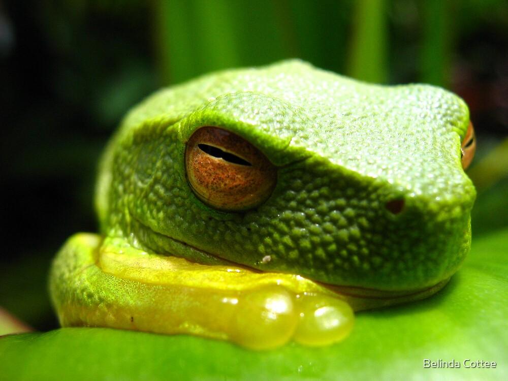 sleepy frog by Belinda Cottee
