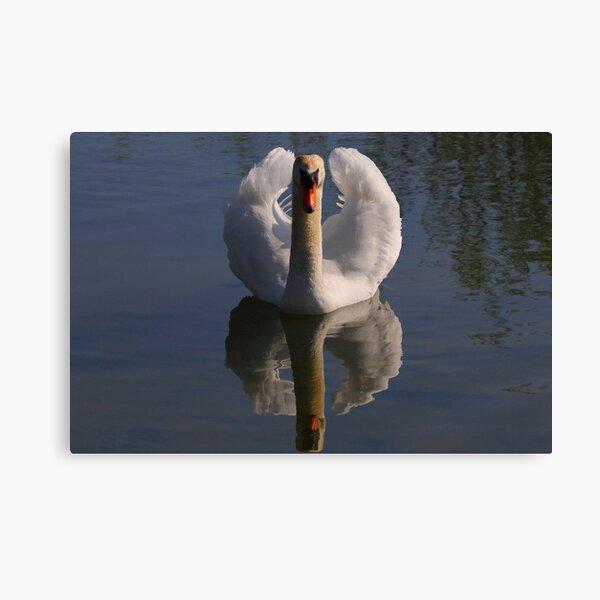Mute Swan #3  Canvas Print