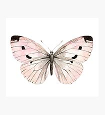 Butterfly flutter - soft peach Photographic Print