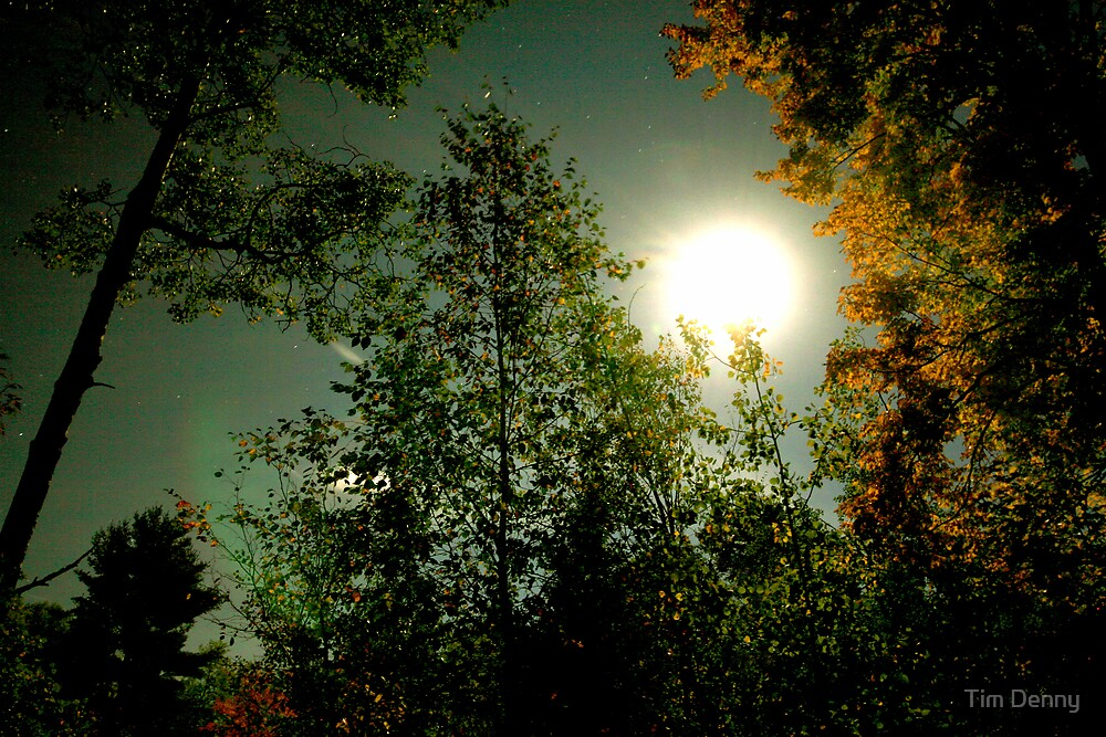 By The Light of The Silvery Moon by Tim Denny