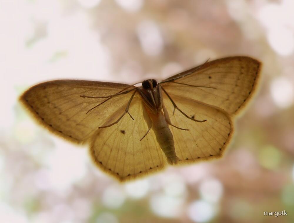 Moth by margotk