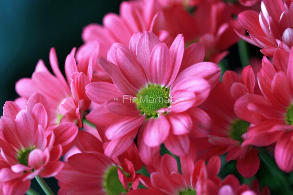 Pink Passion by ~ Fir Mamat ~
