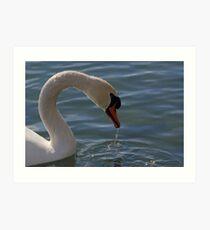 Mute Swan #5  Art Print