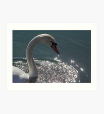 Mute Swan #6  Art Print