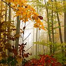 Colorful Misty Morning by Tim Denny