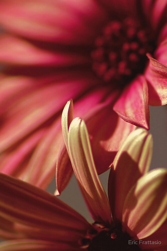 Flower by Eric Frattasio