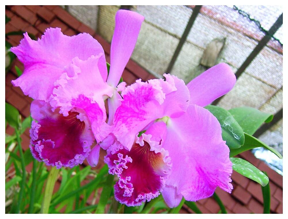 orchidcard by Devika Fernando