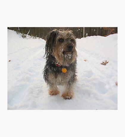 Snow Beard Photographic Print