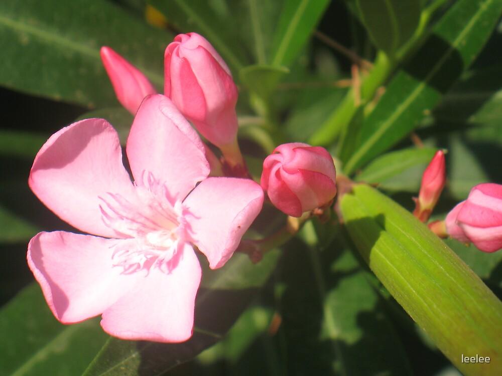 flower power by leelee