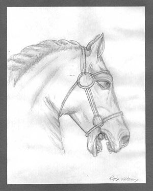 Horse head drawing by Rosaria  D'Alessio