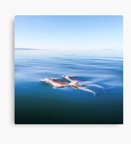 Magic Moments - Dolphins 1 Canvas Print