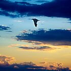 Bird flying in the sunset by Vlavo