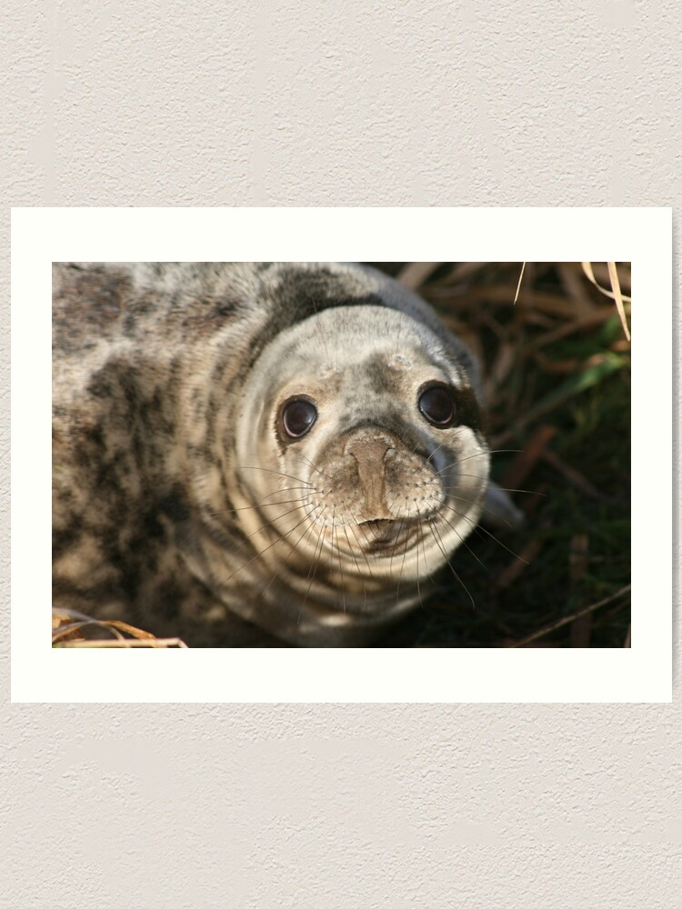 Alternate view of Seal Art Print