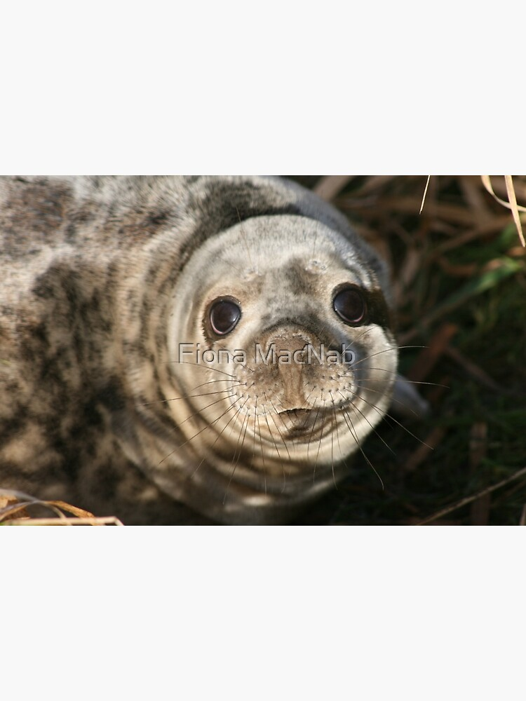 Seal by orcadia