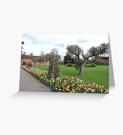 Tulip Line Greeting Card