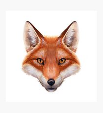Red Fox Face Photographic Print