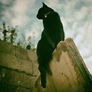 Cat stories... by Louise LeGresley
