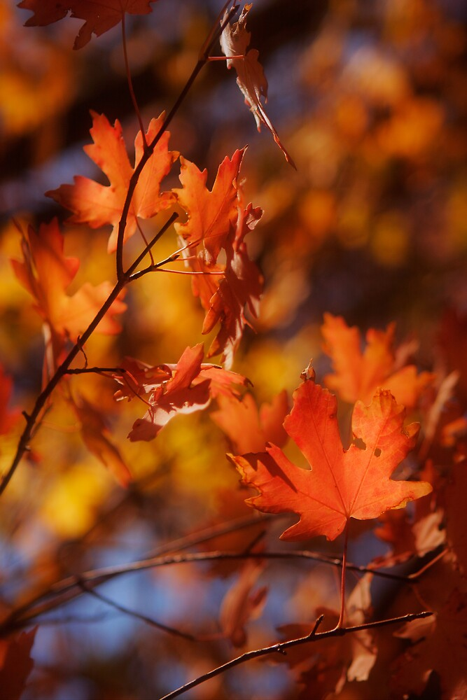 Leaf in red by XiuyiFan