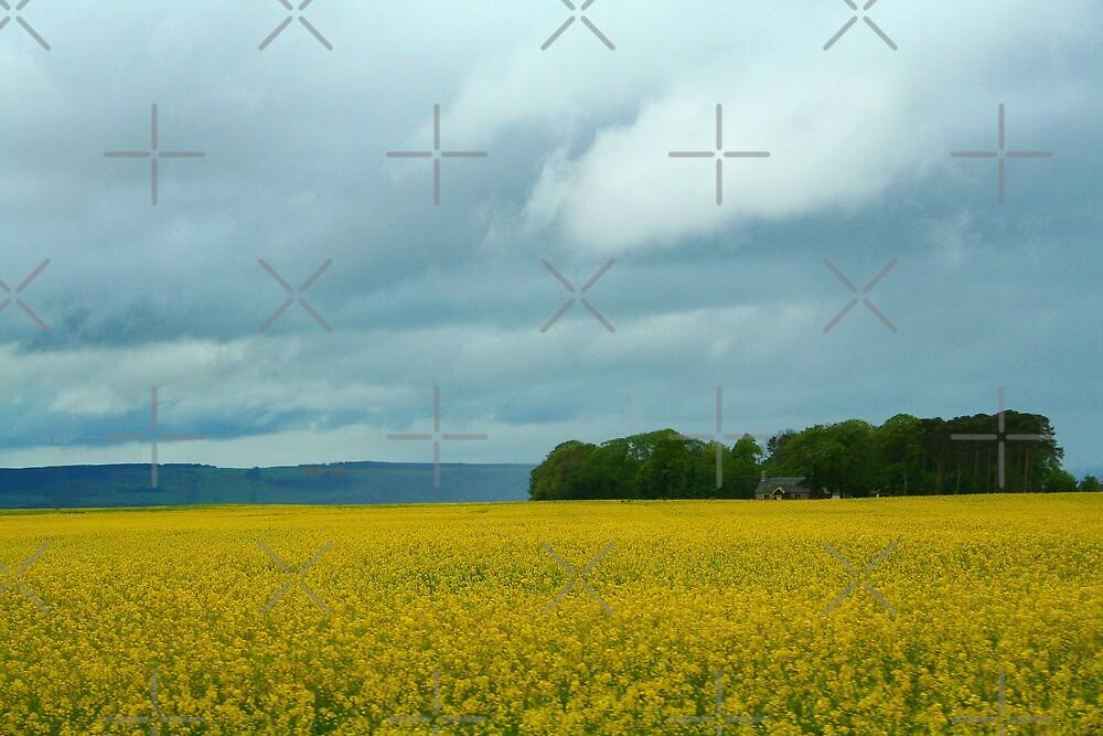 Yellow Field by kadoh