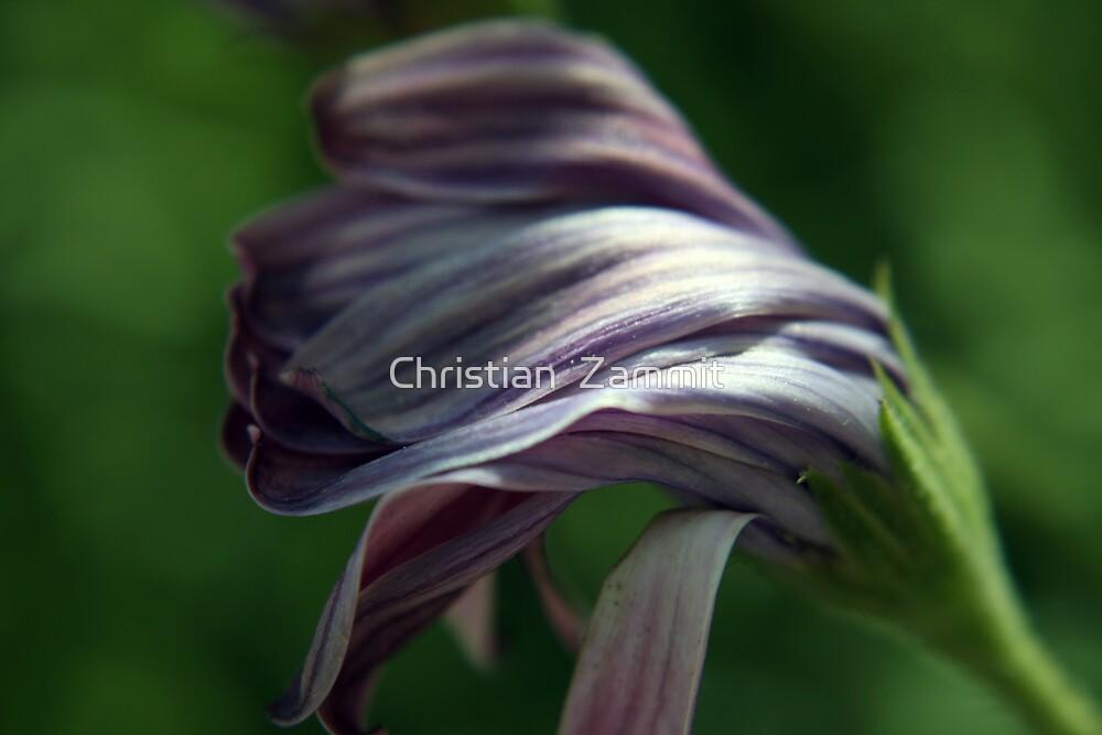 Sleepy flower by Christian  Zammit