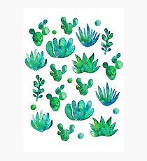 Watercolor Succulents Photographic Print