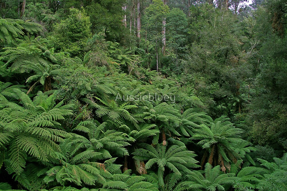 Bulga Park, ( Tree Ferns ) by Aussiebluey