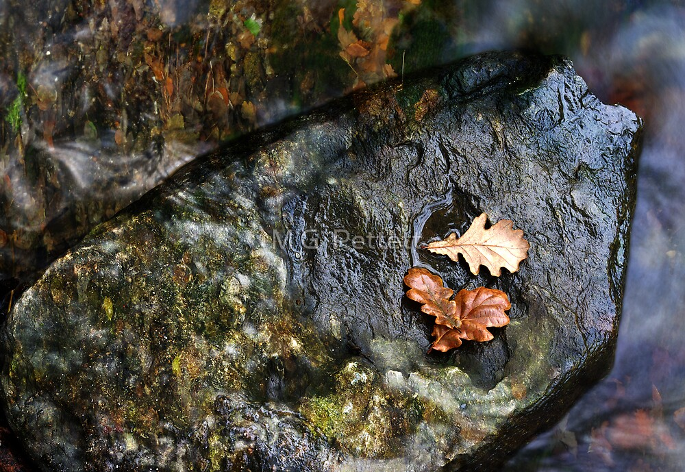 Autumn Palette by M G  Pettett