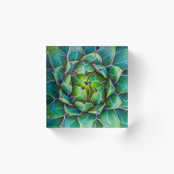 Succulent succulent Acrylic Block