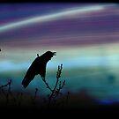 Crow's Dream by Tanya B. Schroeder